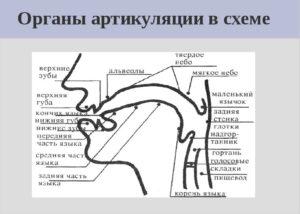 artikulyaciya